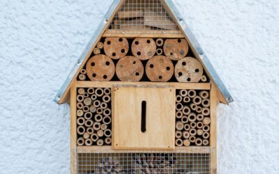 How—And Why—You Should Build A Bee Hotel In Your Backyard