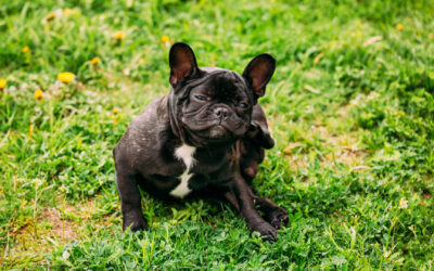 How To Fight A Flea Infestation