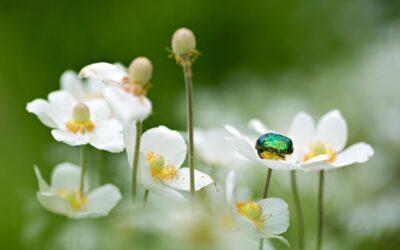 Summer Is Beetlemania!