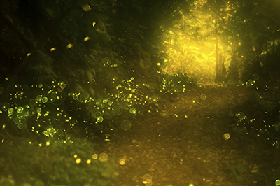 how to get rid of fireflies