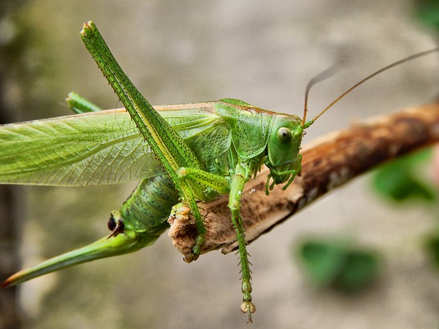 How Insects Use Their Senses to Evade