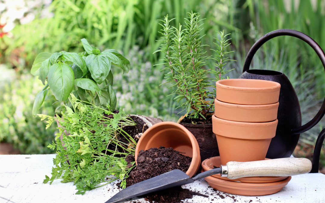 What to Plant to Attract Good Bugs