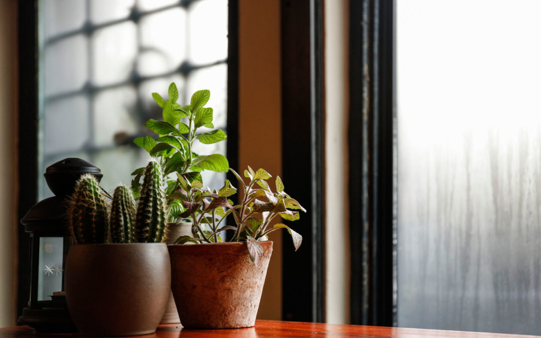 3 Common House Plant Bugs And How To Get Rid Of Them