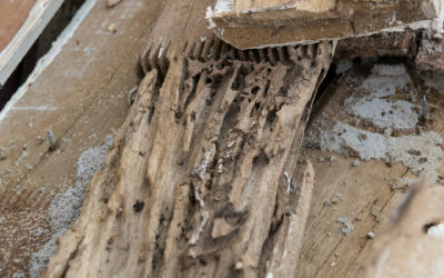 Avoiding A Termite Infestation In Your Home