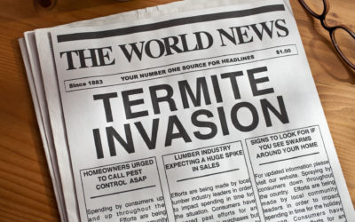 Are Termites Infesting Your Home?
